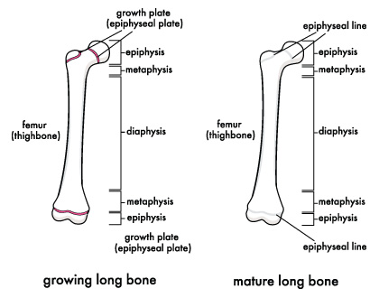 Immature Female Dog Name