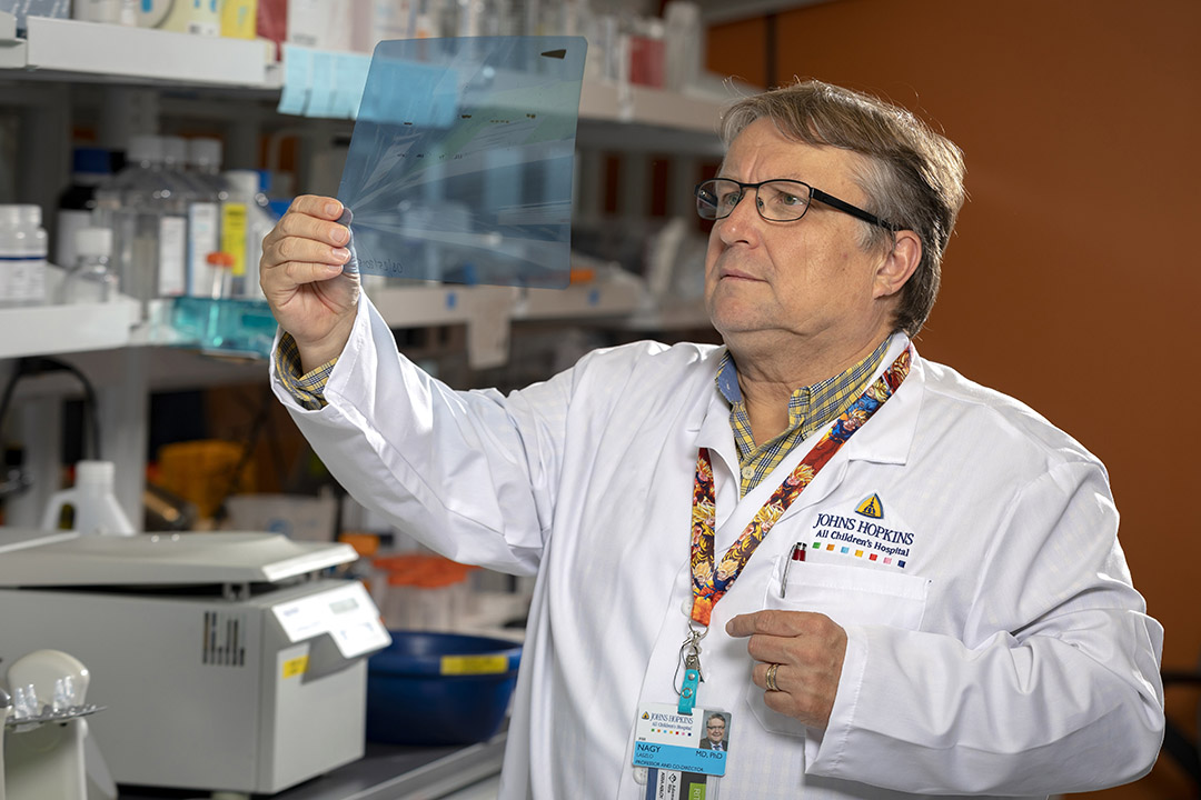 Laszlo Nagy, M.D., Ph.D., co-director of the Johns Hopkins All Children's Institute for Fundamental Biomedical Research